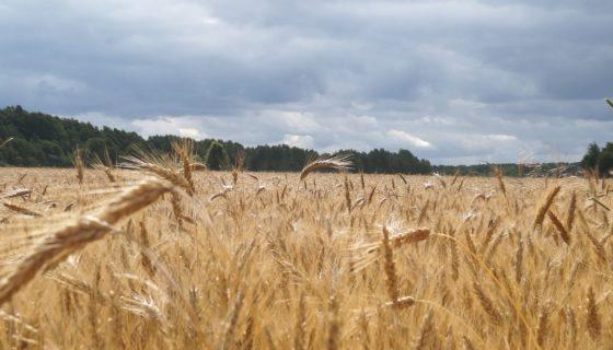Do 65% dofinansowania do ubezpieczeń upraw
